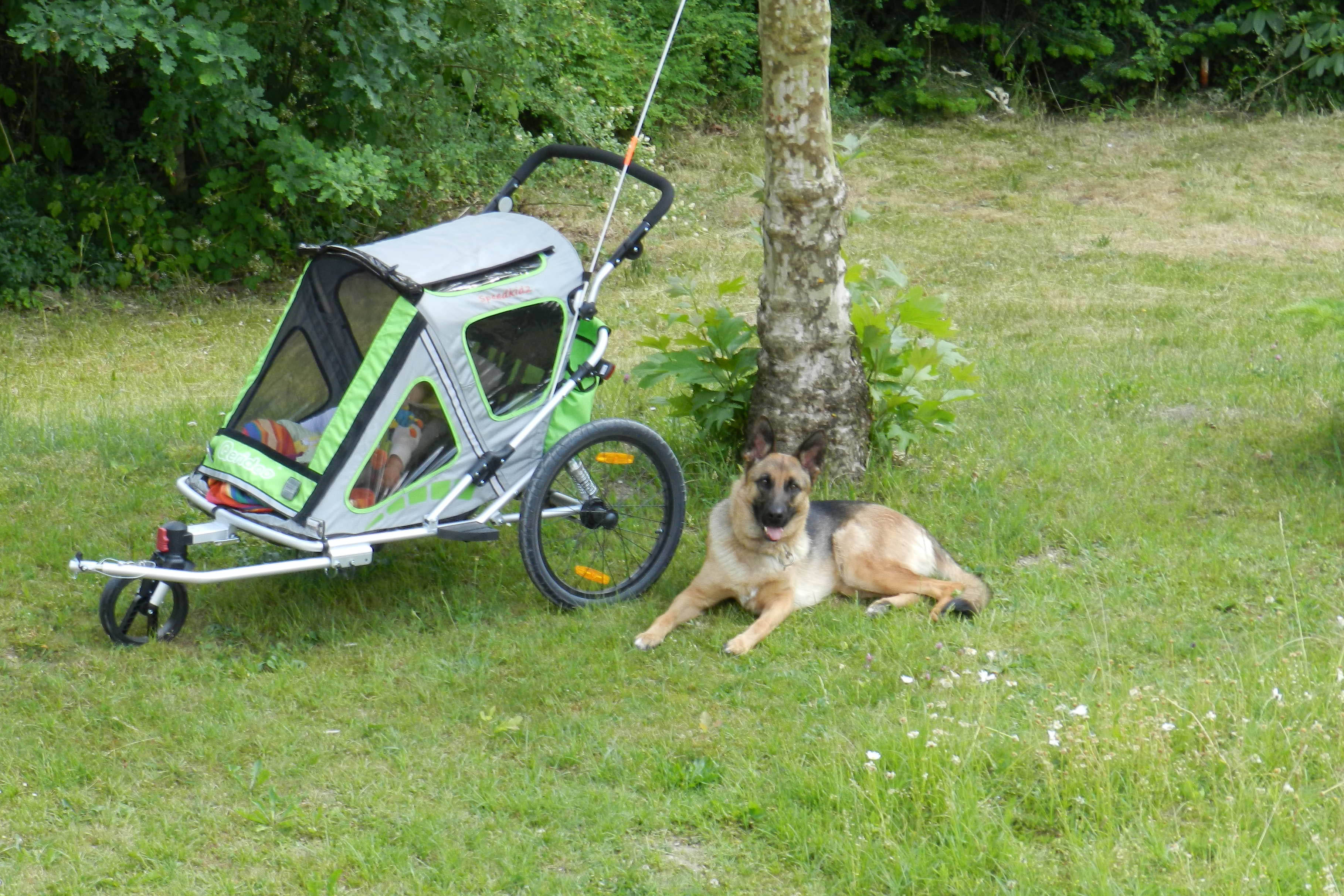 Garten_Hund